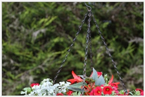 Hanging basket 1